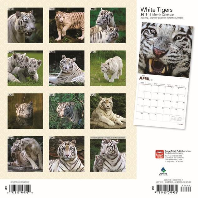 White Tigers Wall Calendar, Big Cats by Calendars