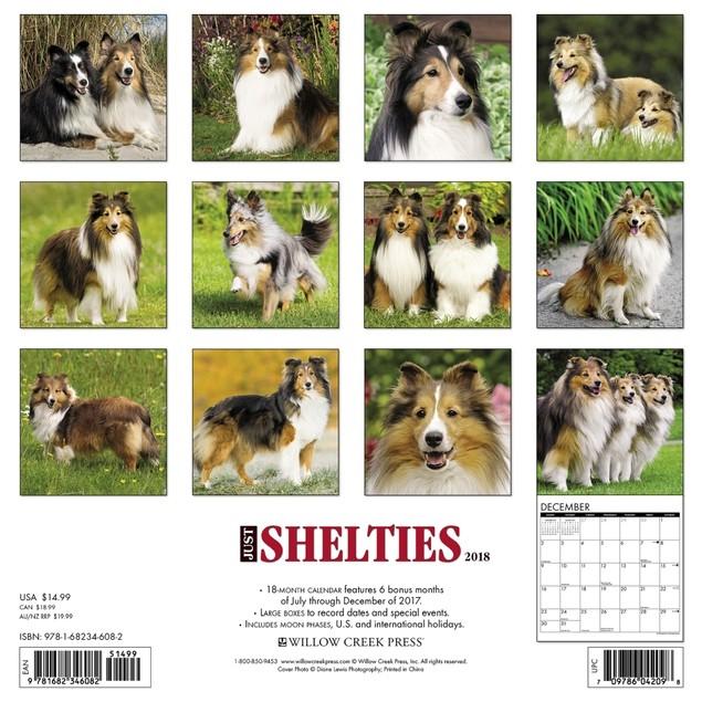 Just Shelties Wall Calendar, Shetland Sheepdog by Calendars