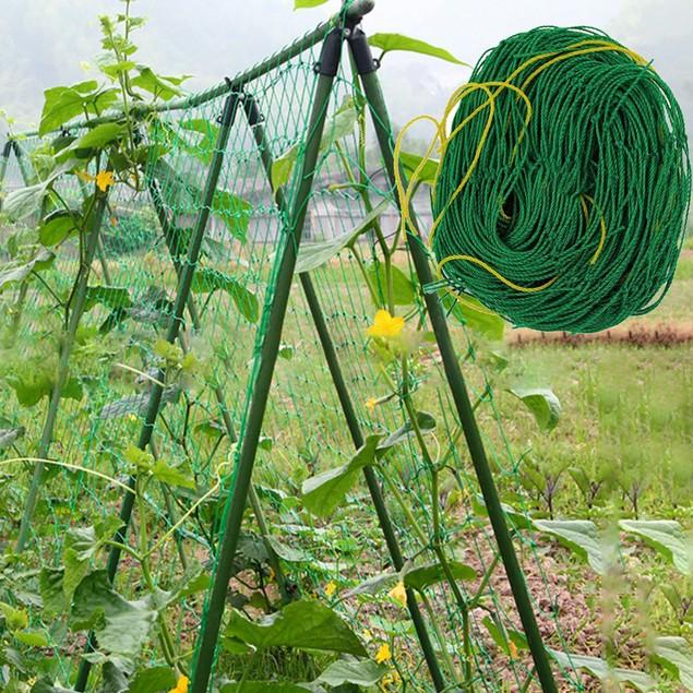 Netting Trellis Net Vegetables Bean Plants Climbing Grow Supporting