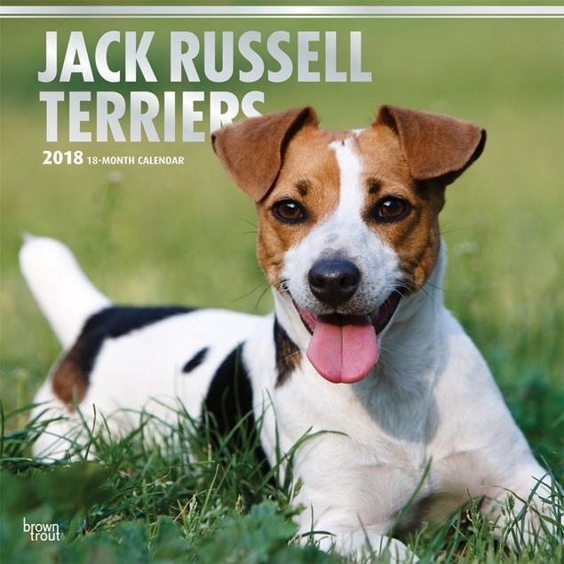 Jack Russell Terriers Wall Calendar, Jack Russell Terrier by Calendars