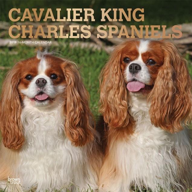 Cavalier King Charles Wall Calendar, Cavalier King Charles Spaniel by Calen