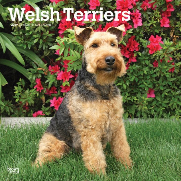 Welsh Terriers Wall Calendar, More Dogs by Calendars