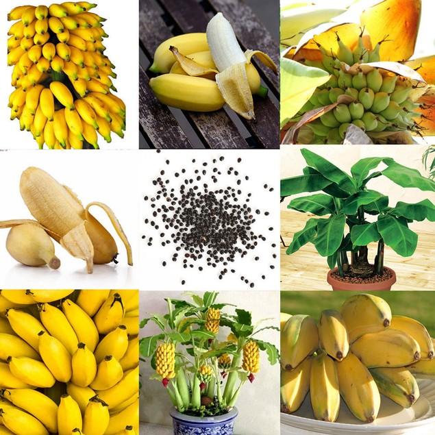 100Pcs Rare Dwarf Banana Tree Seeds Bonsai Fruit Exotic Home Plants