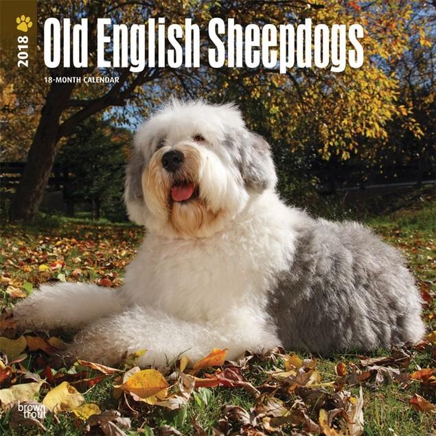 Old English Sheepdogs Wall Calendar, Old English Sheepdog by Calendars