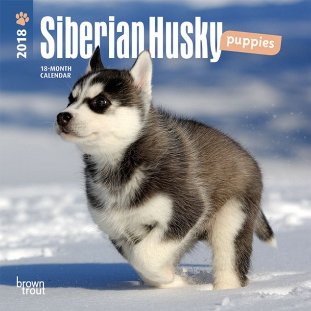 Siberian Husky Puppies Mini Wall Calendar, Siberian Husky by Calendars