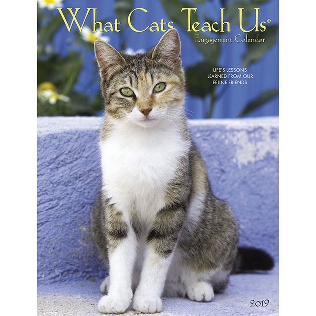 What Cats Teach Us Planner, Assorted Cats by Calendars
