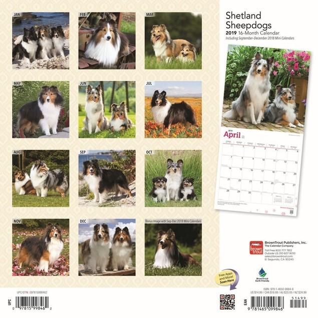 Shetland Sheepdogs Wall Calendar, Shetland Sheepdog by Calendars