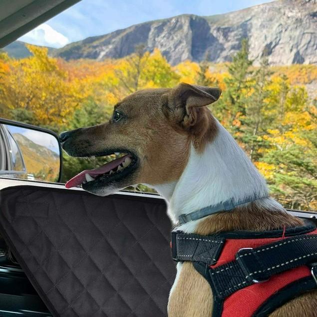 Zone Tech Car Pet Barrier Quilted Waterproof Dog Vehicle Door Cover