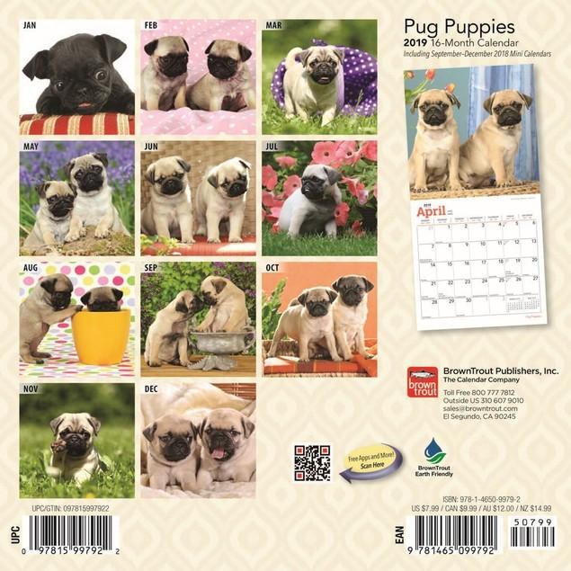 Pug Puppies Mini Calendar, Pug by Calendars
