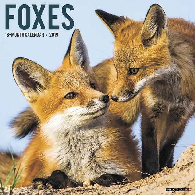 Foxes Wall Calendar, Wildlife by Calendars