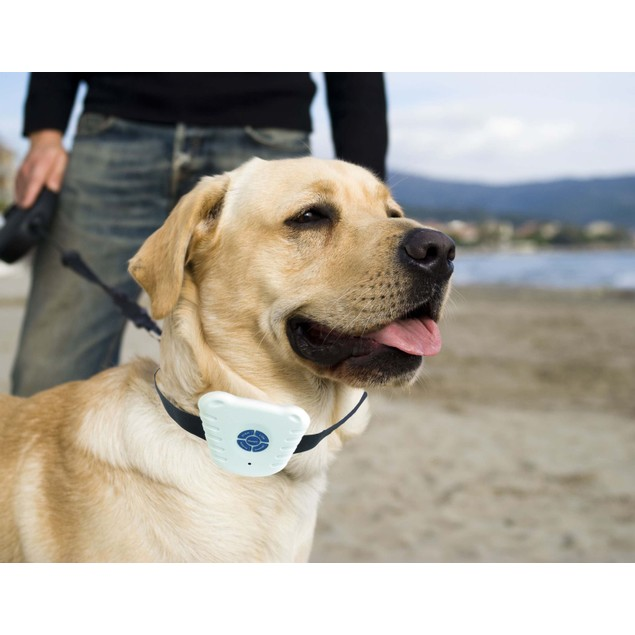 Non-Shock Safe Anti-Bark Collar