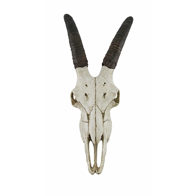 African Sable Antelope Skull Wall Hanging Wall Sculptures