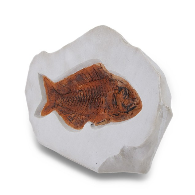 Fossilized Fish Decorative Stylized Stone Statue Statues