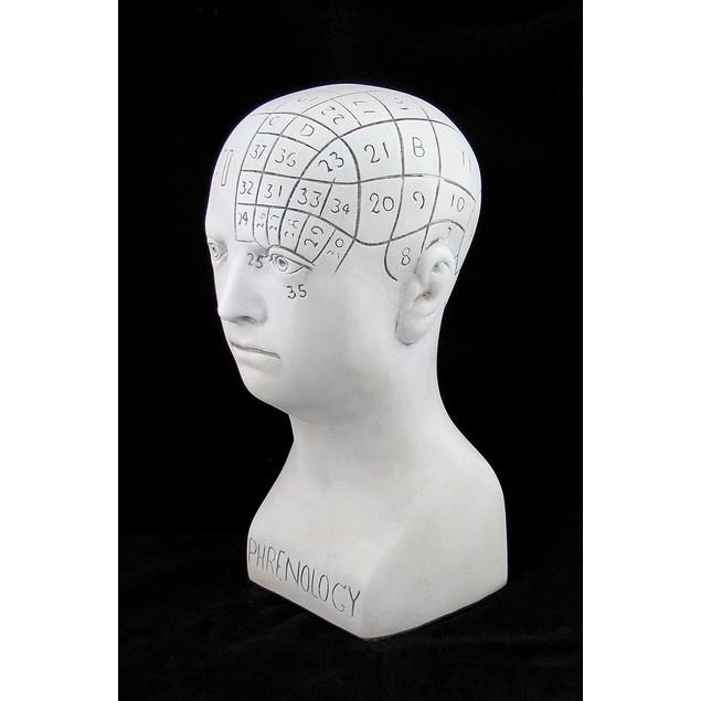 White Plaster Phrenology Head Bust Statues