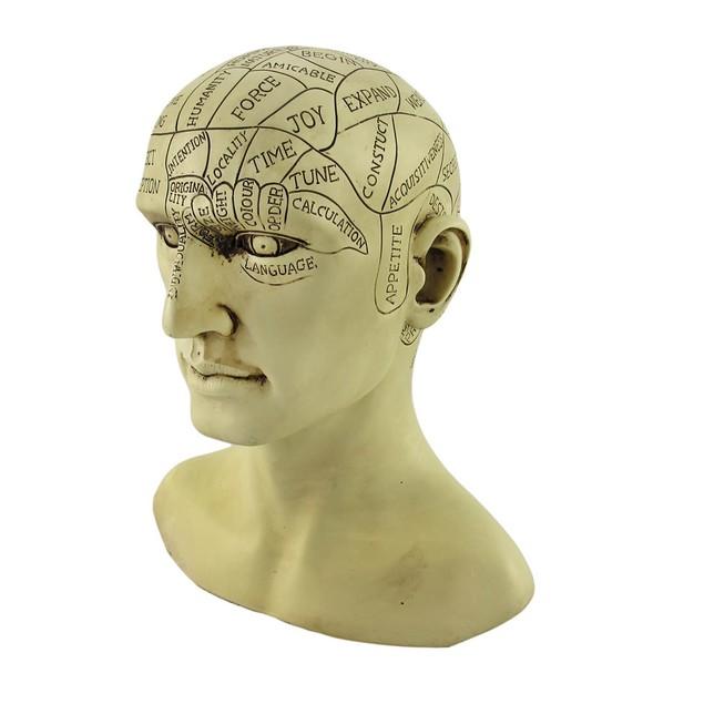 Creepy Cast Resin Phrenology Head Victorian Bust Sculptures