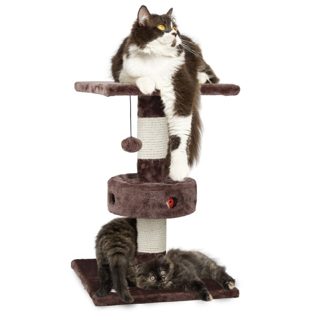Cat Playground Scratching Post with Cat-IQ Busy Box